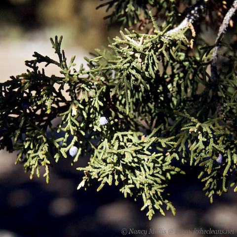 how to cook with juniper berries